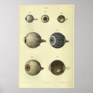 Anatomie-Druck des menschlichen Augen-1866 Poster