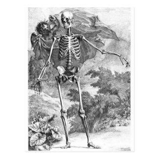 Anatomie Todesder Vintagen Holzschnitpostkarte Postkarte