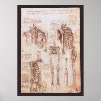Anatomie-Zeichnungs-menschliche Skelette Leonardo  Plakatdruck