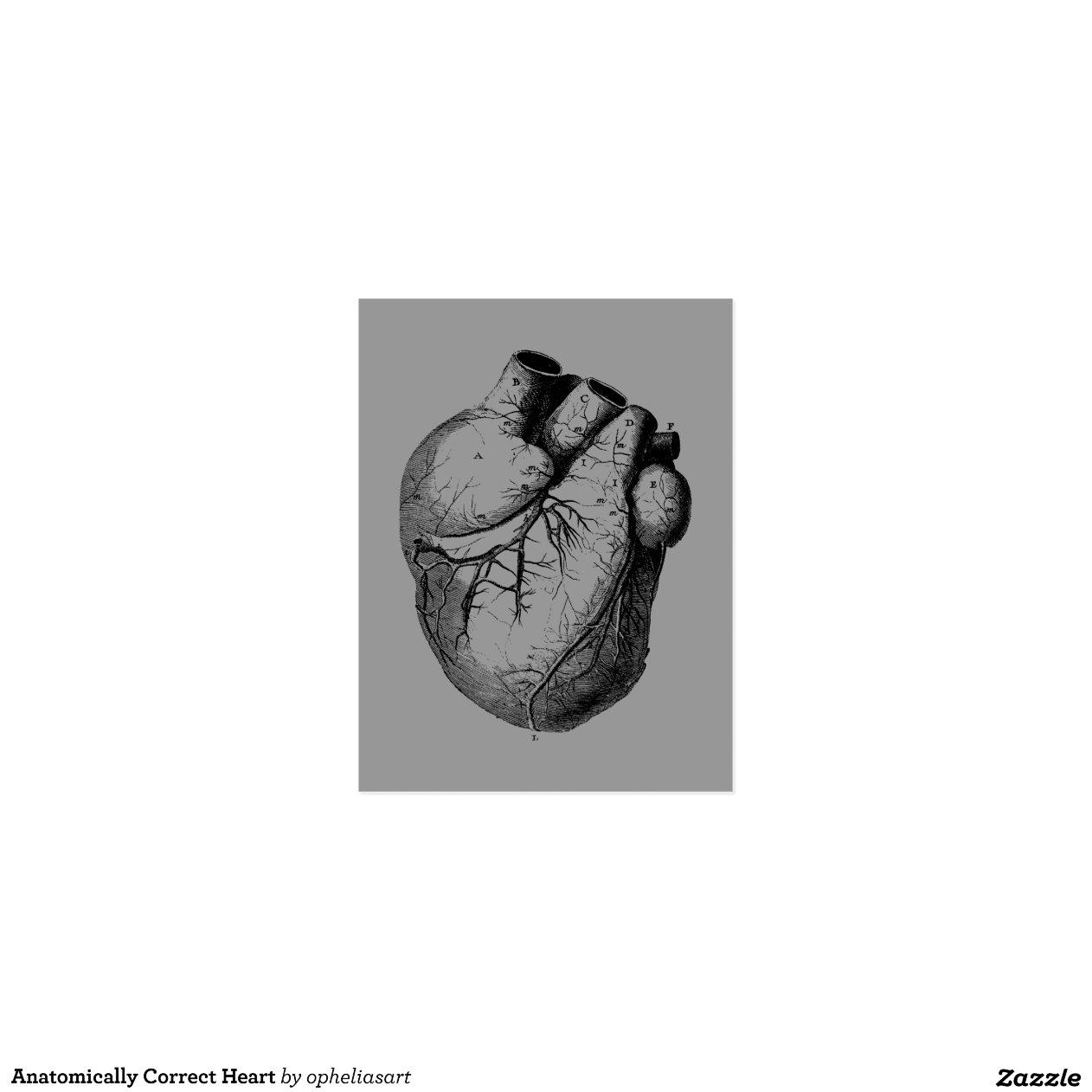 anatomisch korrektes herz postkarte zazzle