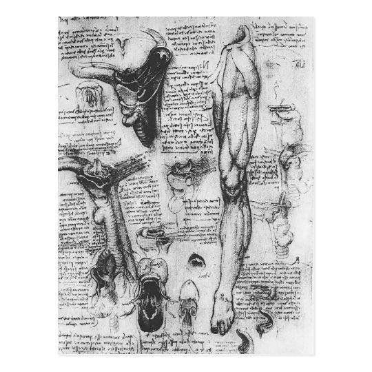 Anatomische Studien LEONARDO Vinci- (Kehlkopf u. Postkarte | Zazzle