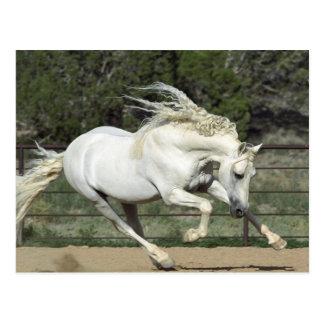 Andalusischer Stallionsbetrieb, Fotorezeptor Postkarte