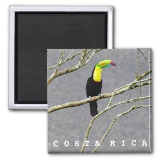 Andenken-Magnet Costa Ricas Toucan Quadratischer Magnet