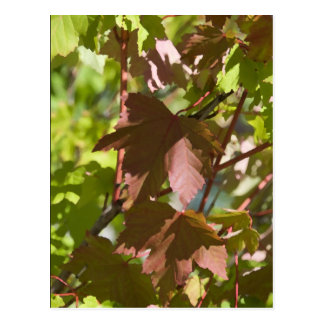 Ändernder Herbst verlässt Postkarte