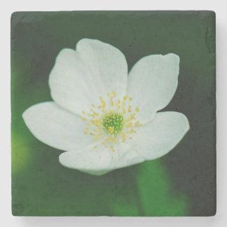 Anemonen-Wind-Blume Steinuntersetzer