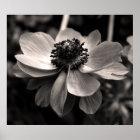 Anemonenschwarzweiss-Blumenphotographie Poster