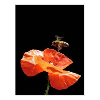 Anflug auf Mohnblume Postkarte