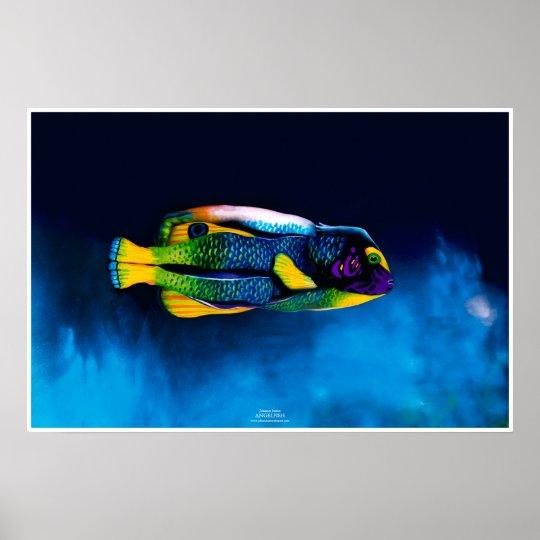 Angelfish by Johannes Stötter Poster