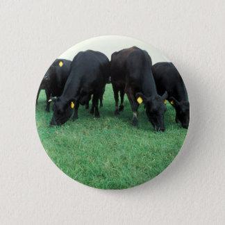 Angus-Vieh Runder Button 5,7 Cm