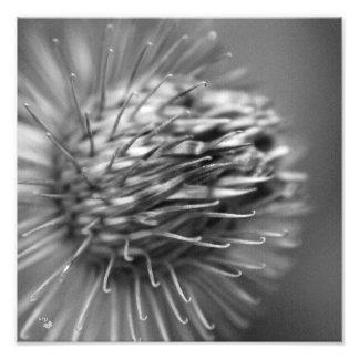 anhänglich - Premium Fotodruck Satin schwarzweiß