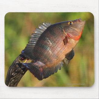 Anhinga und Fische Mousepads
