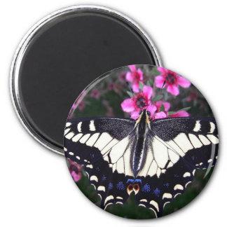 Anis-Frack-Schmetterlings-Foto-Magnet Runder Magnet 5,7 Cm