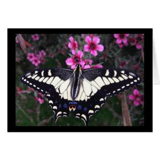 Anis-Frack-Schmetterlings-leere Karte