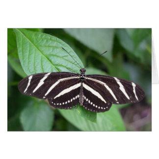 Anmerkungskarte des Schmetterlinges 4 Karte