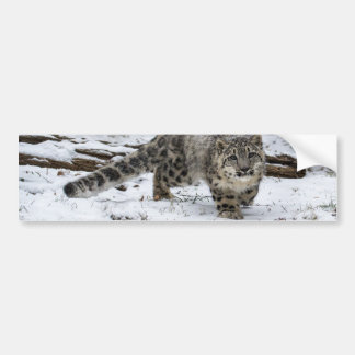 Anpirschende Vögel Schnee-Leopard-CUBs Autoaufkleber