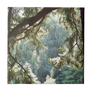 Ansicht durch die Bäume Keramikfliese