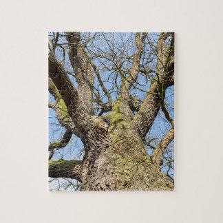 Ansicht von unteneichenbaum ohne Blätter im Winter Puzzle
