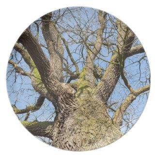 Ansicht von unteneichenbaum ohne Blätter im Winter Teller