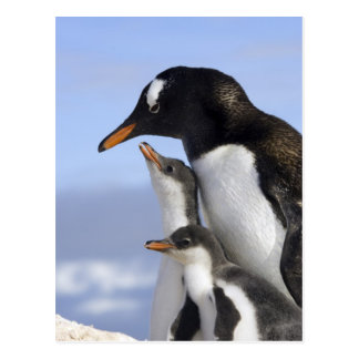 Antarktische Halbinsel, Neko Hafen, Gentoo Postkarte