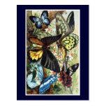 Antike exotische Schmetterlingsschmetterlingsillus Postkarte