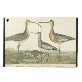 Antike Wasser-Vogel-Sumpf-Illustration