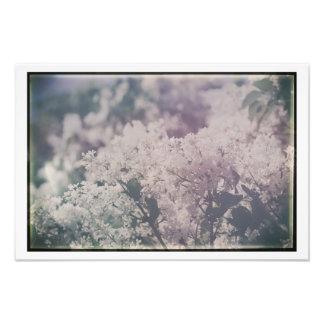 Antike weiße lila Blumen-hübsche Blumenfliedern Fotodruck