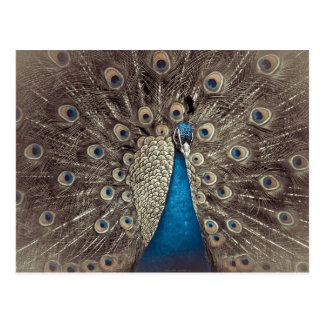 Antiker blauer Pfau Postkarte