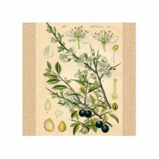 Antiker botanischer freistehende fotoskulptur