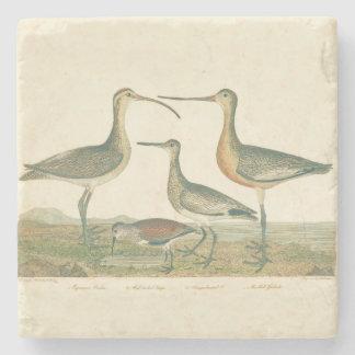 Antiker Vögel Audubon Küstensumpf Steinuntersetzer