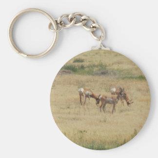 Antilope, die in Utah scherzt Schlüsselanhänger