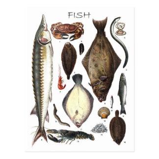 Anzeige der verschiedenen Arten der Fische Postkarte