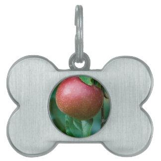 Apfel auf dem Baum Tiermarke