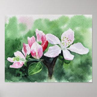 Apfelbaum-Blume Poster