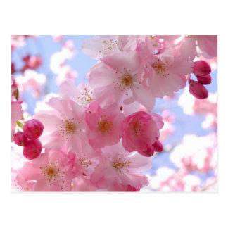 Apfelblüten Postkarte