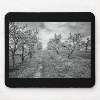 Apfelgarten im Frühjahr Mauspads