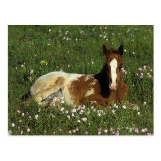 Appaloosa-Fohlen, das in den Blumen niederlegt Postkarte