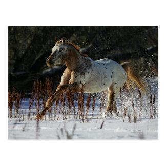 Appaloosa-Pferd, das in den Schnee läuft Postkarte