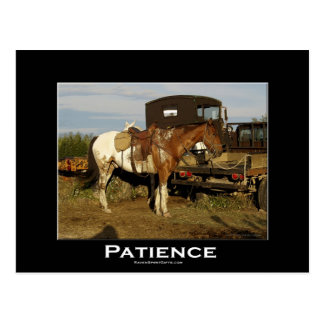 Appaloosa-Pferdepferdeartige motivierend Postkarte