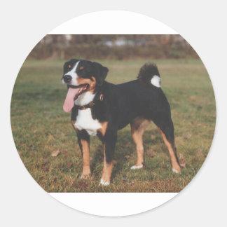 Appenzeller Sennenhund Hund Runder Aufkleber