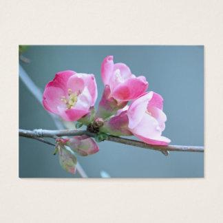 Apple blühen Minidruck #P0358 Visitenkarte