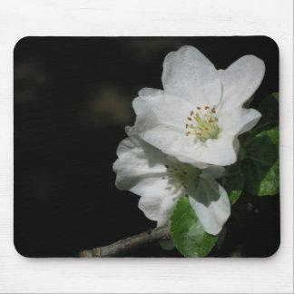 Apple blühen mousepad