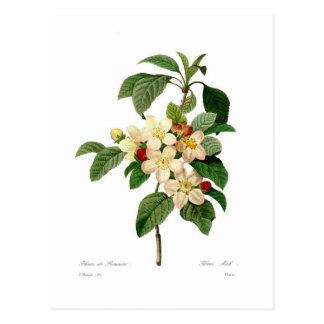 Apple blühen postkarte
