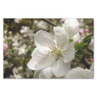 Apple blühen Seidenpapier