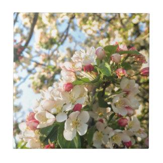 Apple blühen Sonnenschein Kleine Quadratische Fliese