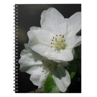 Apple blühen spiral notizbücher