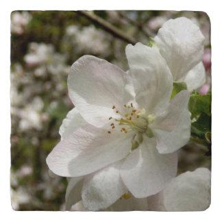 Apple blühen SteinTrivet Töpfeuntersetzer
