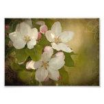 Apple-Blüten-Gruppen-Foto-Druck