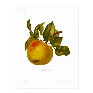 Apple der Steine Postkarte