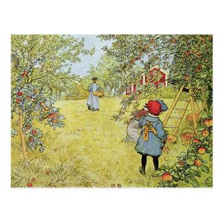 Apple ernten postkarte