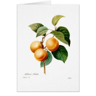 Aprikose Grußkarte